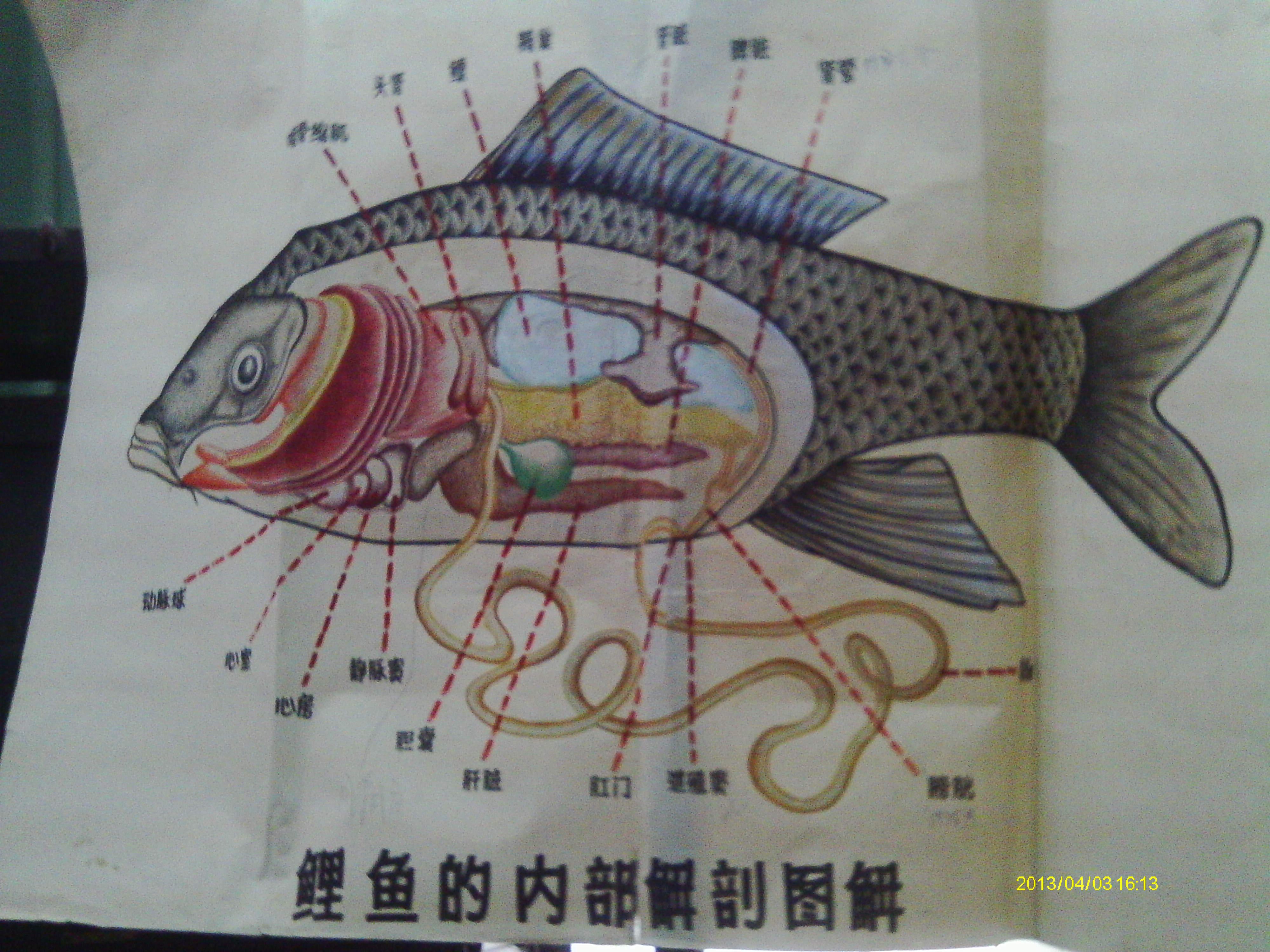 杀鱼的动物学实验 - 逝去的青春